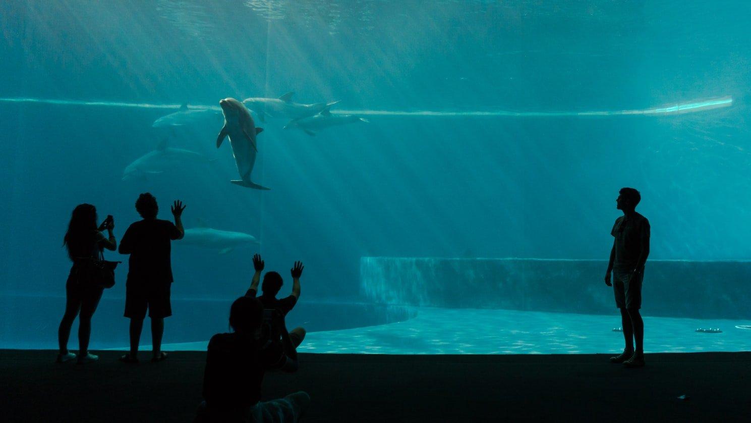Aquarium in Genua Italien