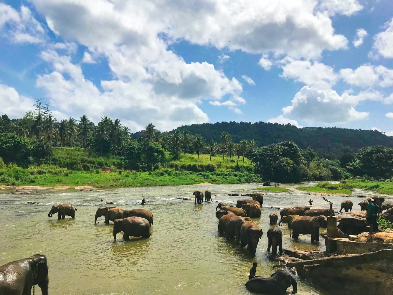Elefanten baden im Fluss Sri Lanka