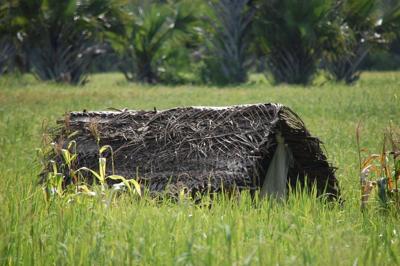 Landwirtschaft auf Sansibar