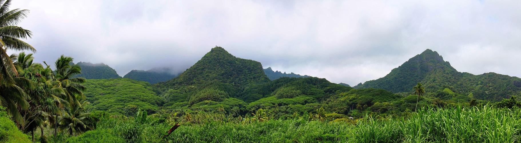 Blick auf Regenwald in Rarotonga Cookinseln