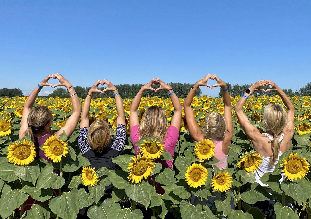 Menschen im Sonnenblumenfeld Ungarn