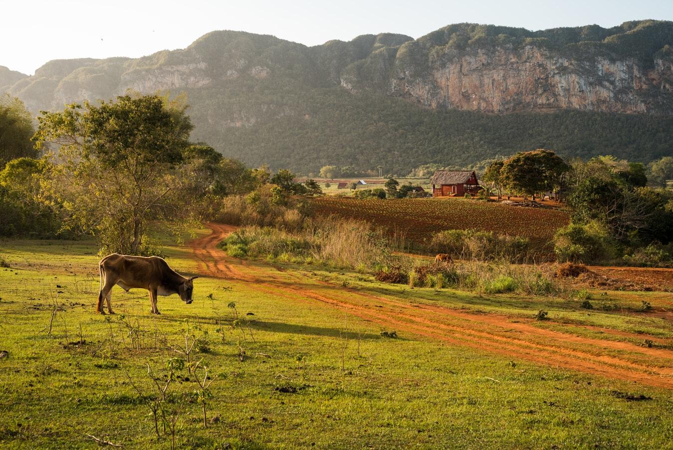 Landschaft im Valle de Viñales in Kuba